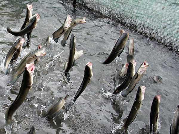 Mơ thấy cá đánh con số nào?