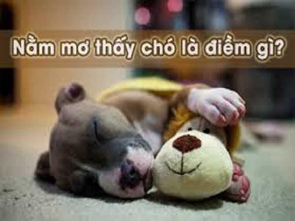 Mơ thấy chó mang đến điềm báo gì?