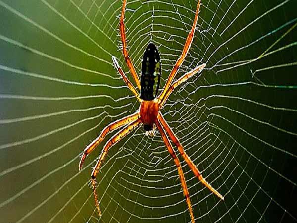 Mơ thấy nhện là điềm báo gì? Đánh con gì trúng lớn?