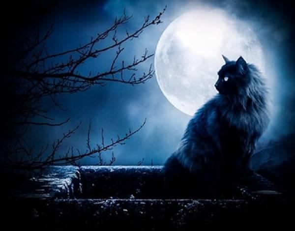 Giải mã giấc mơ thấy mèo đen là điềm gì đánh lô con nào
